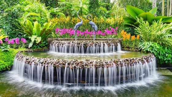 シンガポール国立蘭園入場チケット