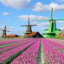 Zaanse Schans Tour from Amsterdam Tickets
