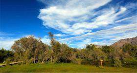 沙棘林湿地公园成人票
