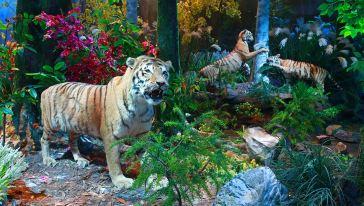 动物乐园 (3)