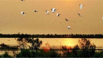 焦岗湖图片11