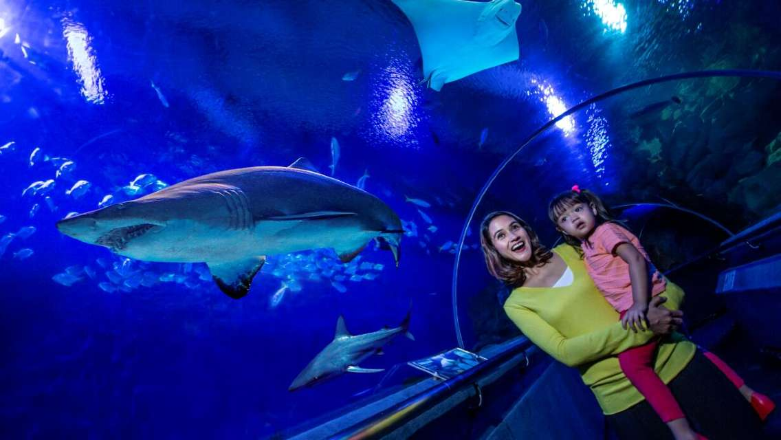 23% Off | Aquaria KLCC Admission Ticket (QR Code Direct Entry)