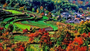 《七彩田园》七彩的田园给塔川村村民创造了多彩的人生。
