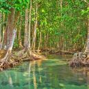 斯里蘭卡幫托塔城市觀光+紅樹林探索一日遊(科倫坡出發+紅樹林遊船+午餐)