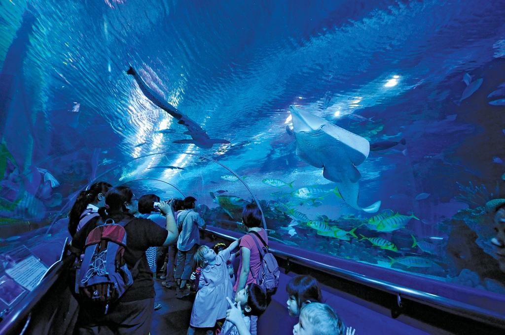 1415964吉隆坡水族馆7