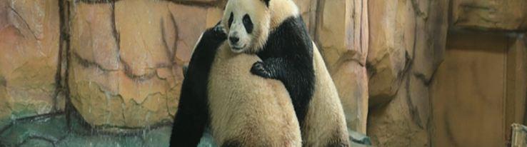 泉州海丝野生动物世界7