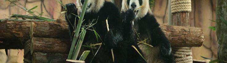 泉州海丝野生动物世界9