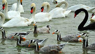 天鹅湖动物基地成人优惠票