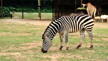 秦岭动物园1