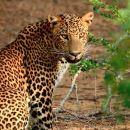 斯里蘭卡科倫坡+康提佛牙寺+紅樹林+加勒+雅拉包車六日遊(贈鮮花接機+含門票+電話卡+小魚 Spa)