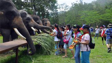 给大象喂食5