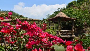 紫莲森林度假村(7)