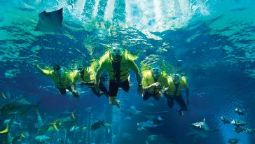 Ultimate Snorkelling