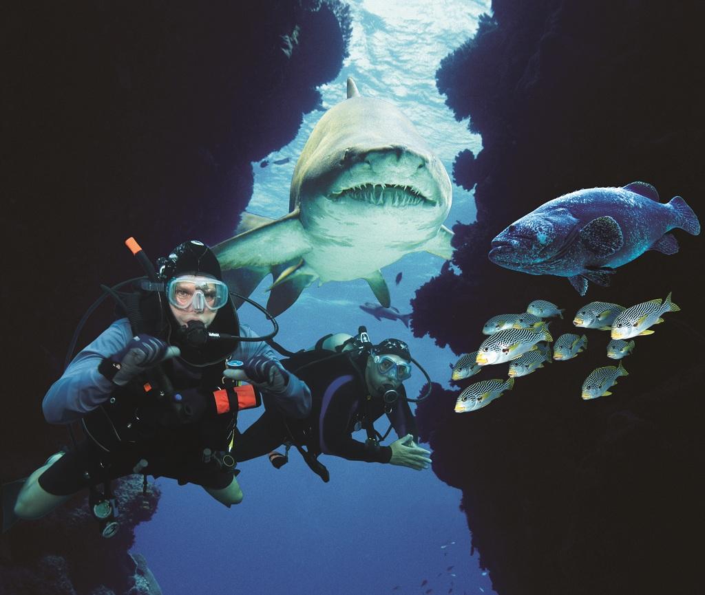 1415964吉隆坡水族馆1