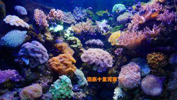 13珊瑚海