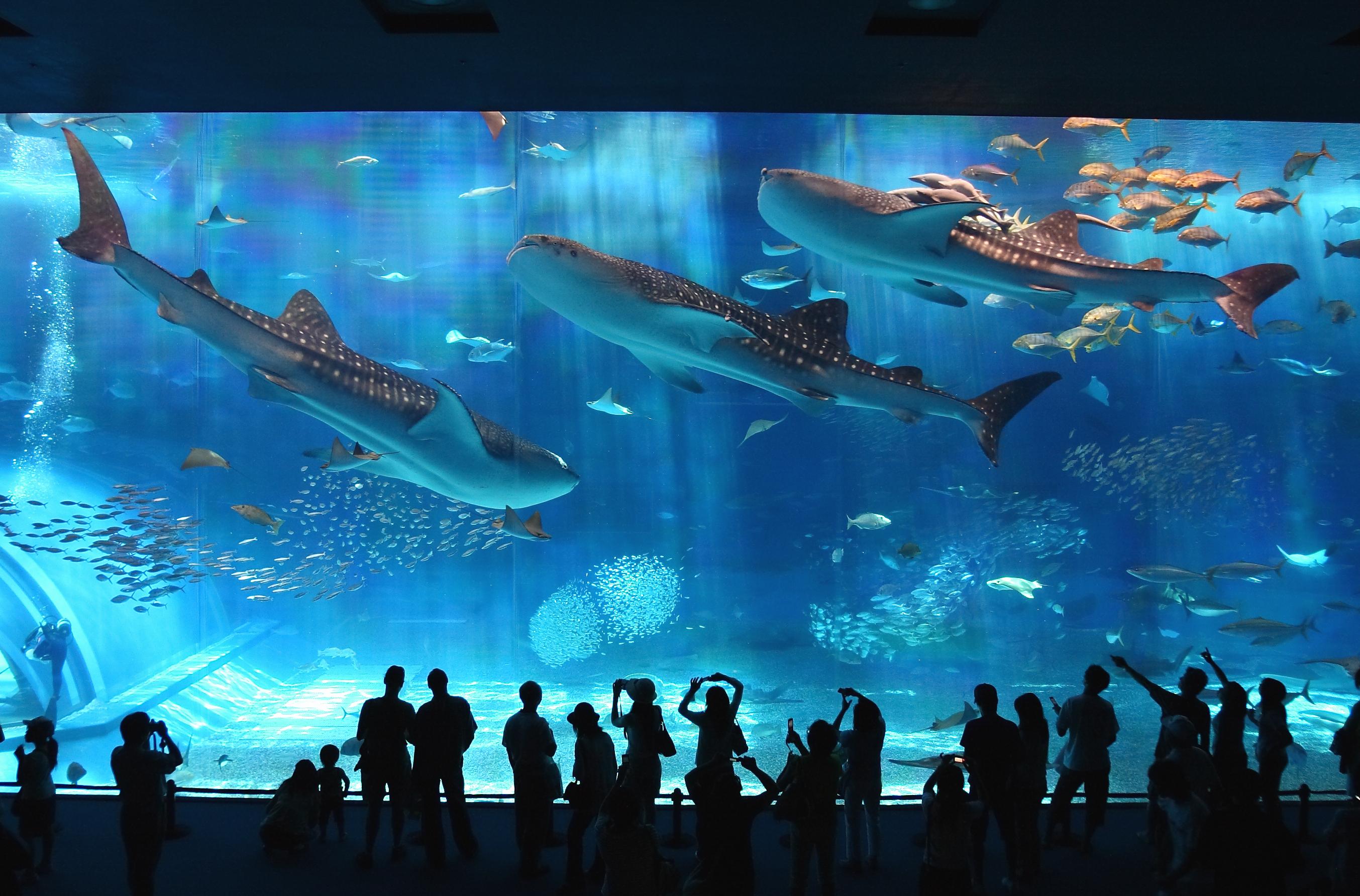 沖繩美麗海水族館+古宇利島+萬座毛一日遊(HipHopBus A)