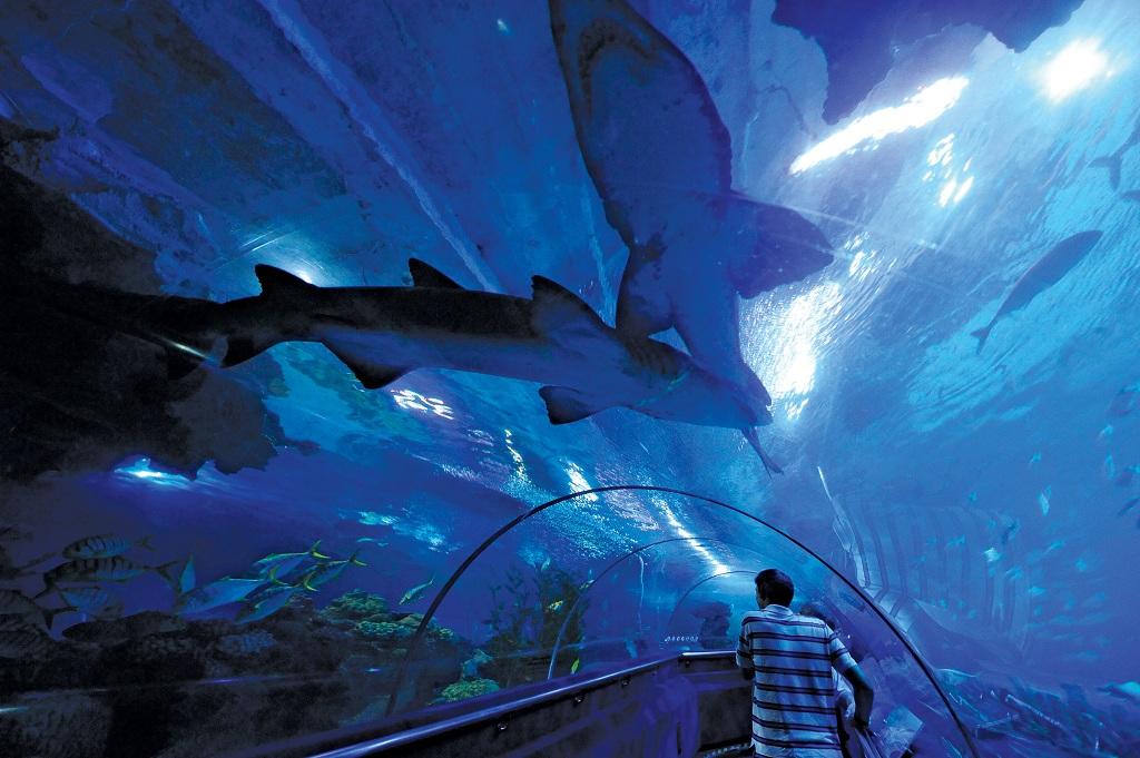 1415964吉隆坡水族馆8