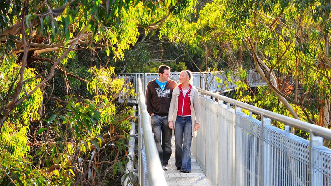 Illawarra Fly Treetop Walk+Zipline Tour