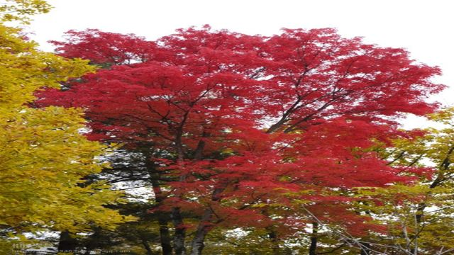 黑龙江哈尔滨吊水壶风景区森林氧吧一日游【登山、亲近自然】