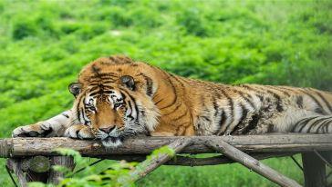 秦岭动物园3