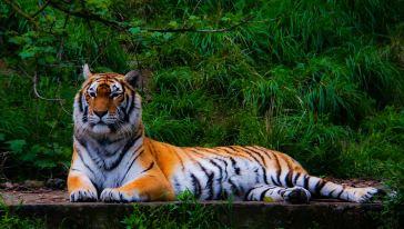 雅戈尔动物园 (4)