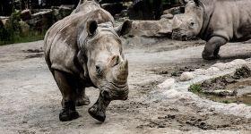 上海野生动物园精彩游上野双人套票(含普通区马戏周末节假日12:00场)