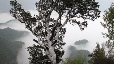 神农山 (12)