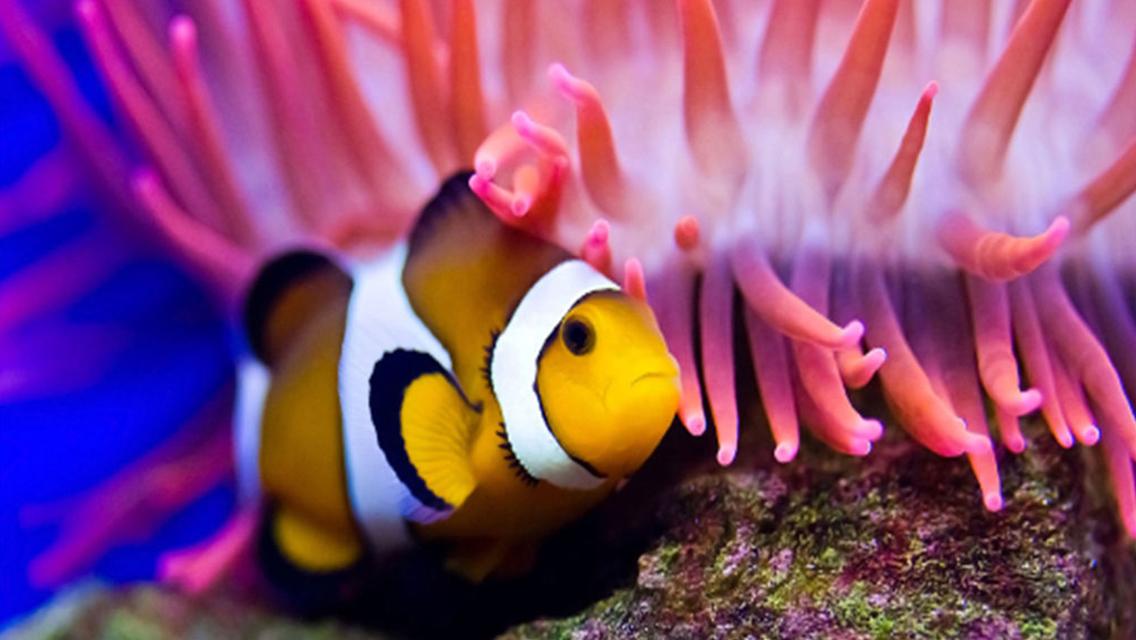 샤먼 산호초 해양생태박물관 입장권