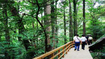 彩虹桥 (13)