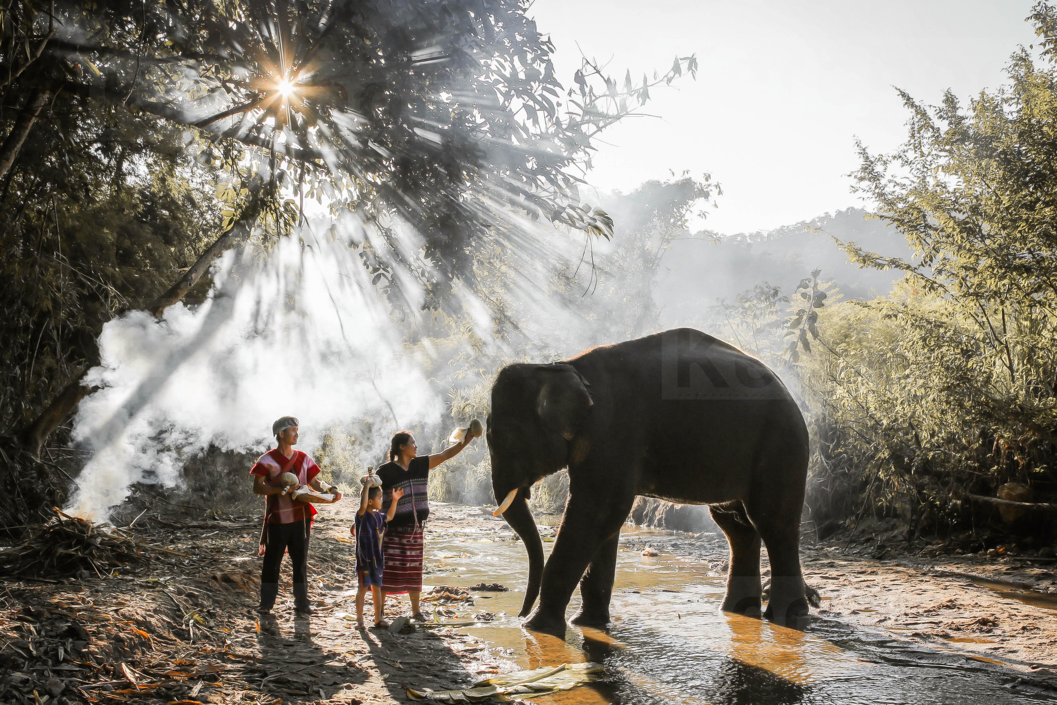清邁 Kerchor 大象營一日遊(大象生態保護營照顧大象 半日/一日可選)