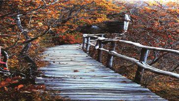 吊水壶国家森林公园06