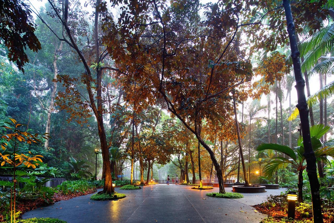 3672-新加坡植物园-1-sy814 (1)
