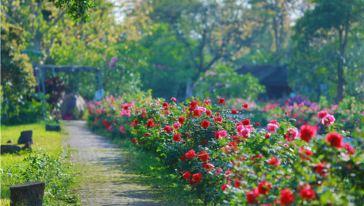 宝趣玫瑰世界 (11)