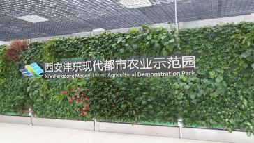 沣东农博园 (4)