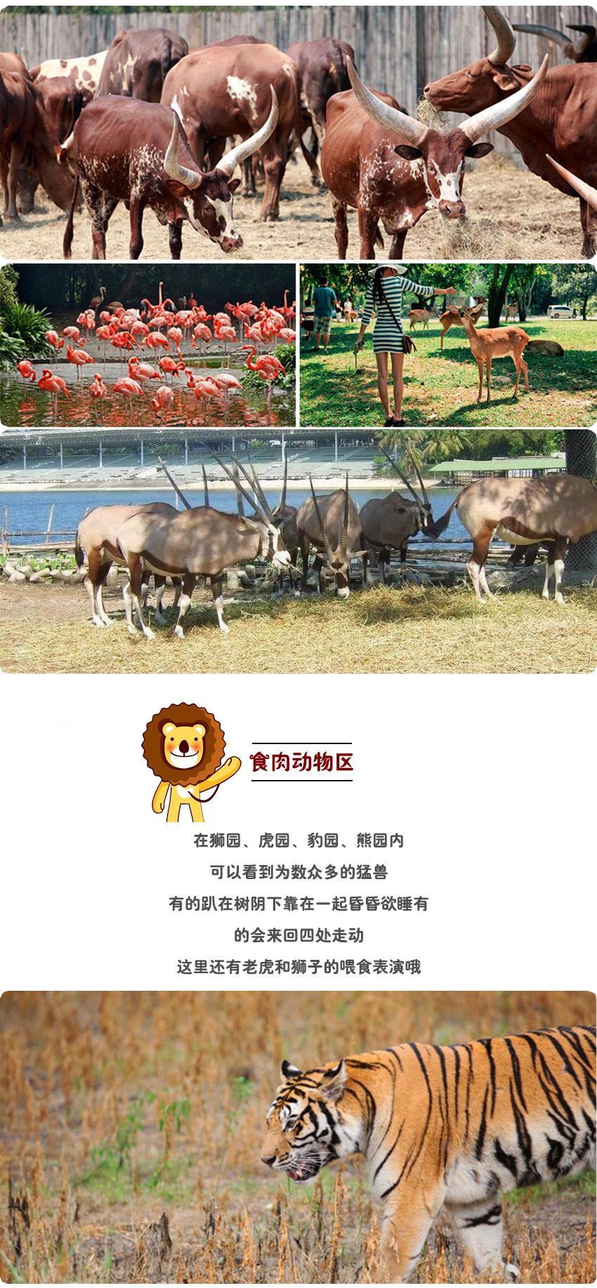 动物世界4