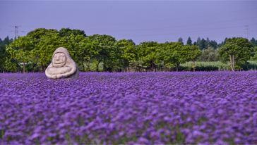 紫海鹭缘 (19)