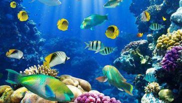 南宁海底世界1