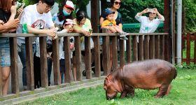上海野生动物园门票+VIP2区马戏(周一至周日 下午场)(成人套票)