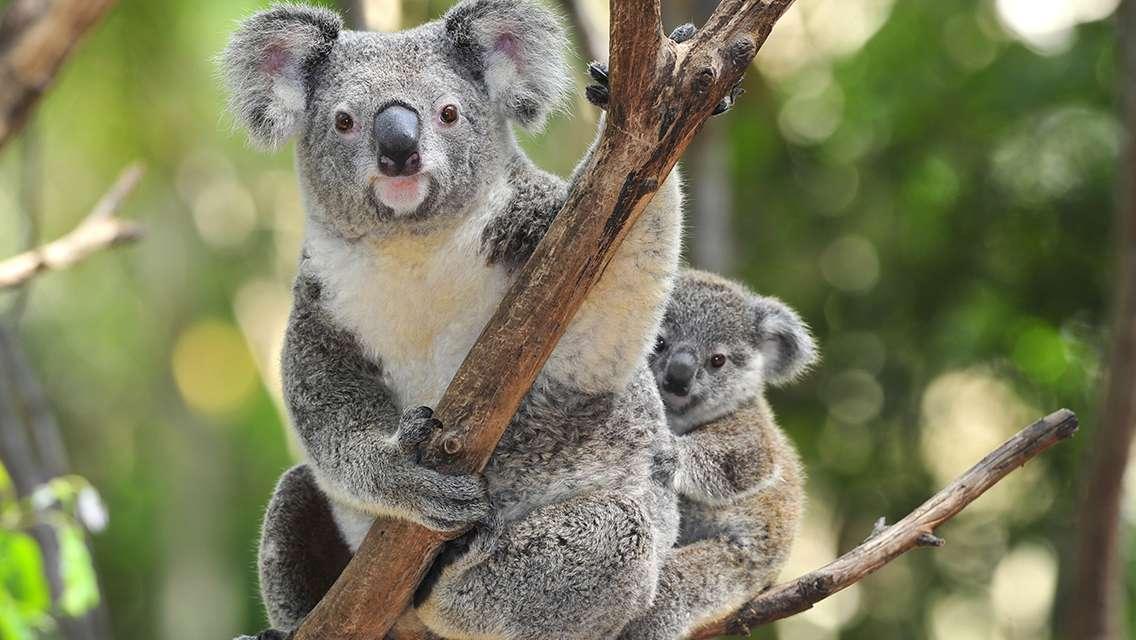 Sydney Wildlife Park