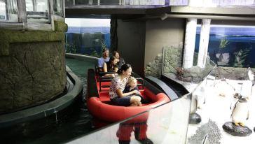 悉尼水族馆-新7