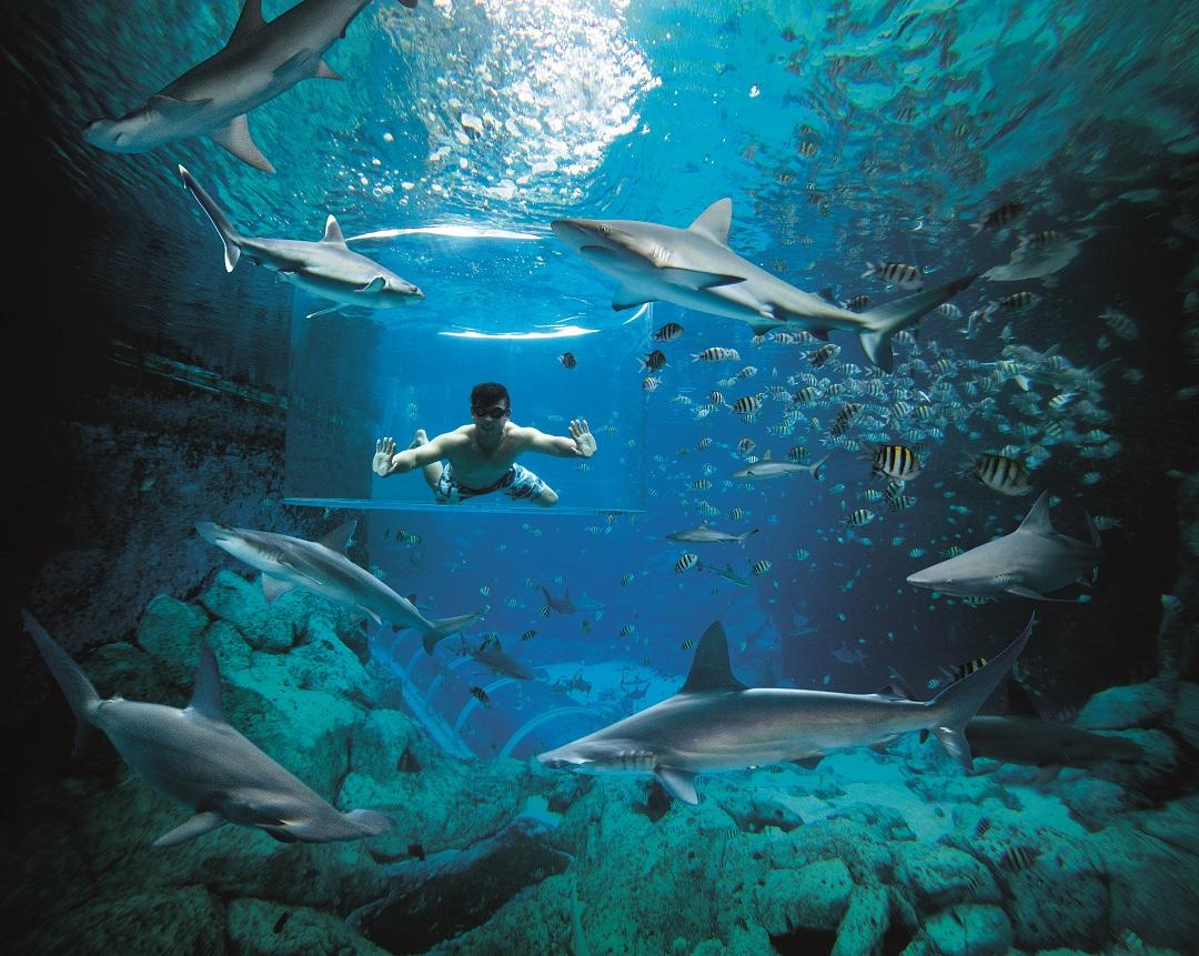水上探险乐园-圣淘沙海洋馆-勇闯鲨鱼关-亚克力