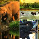 斯里蘭卡大象孤兒院+康提佛牙寺+皇家植物園包車一日遊(酒店接送+含門票+贈送中式午餐)