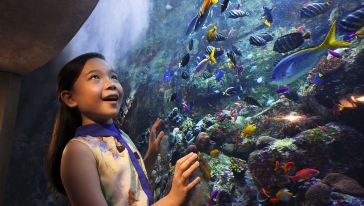 Asian girl Aquarium