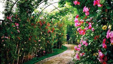 宝趣玫瑰世界 (3)