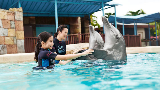 Singapore Dolphin Island Interaction Programs