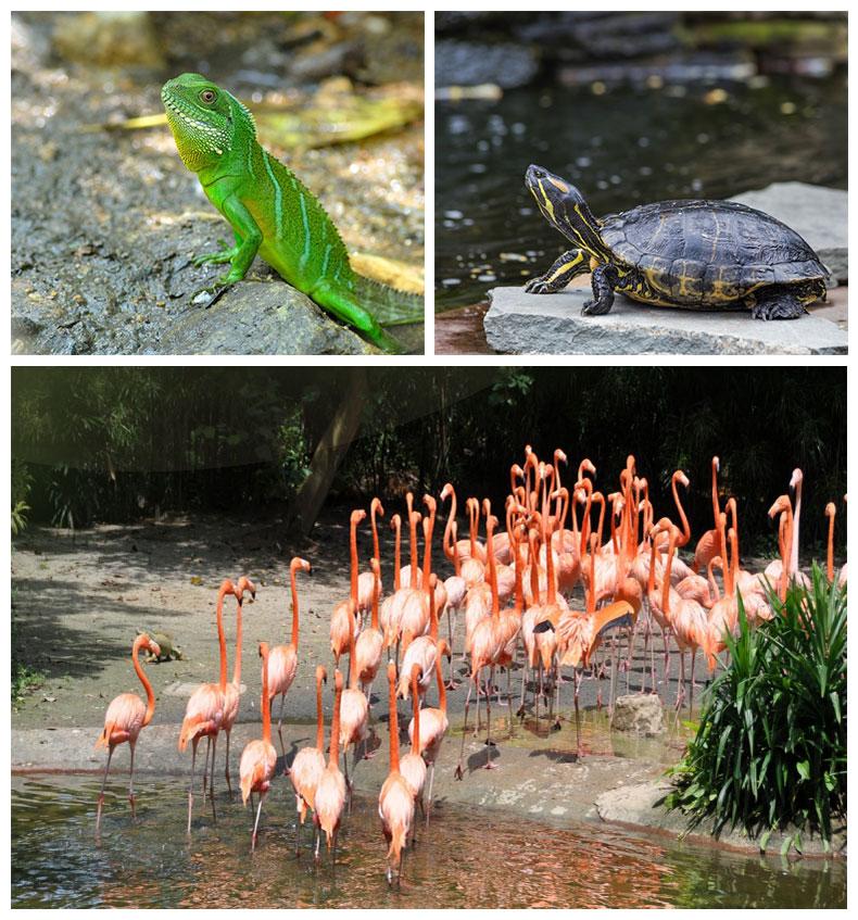19227富国岛野生动物园10