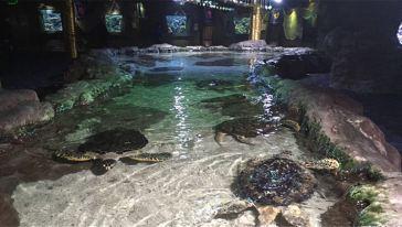郑州海洋馆 (17)