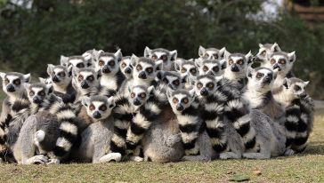 10狐猴岛 (62)