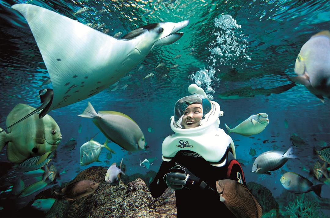 水上探险乐园-圣淘沙海洋馆-海底漫步