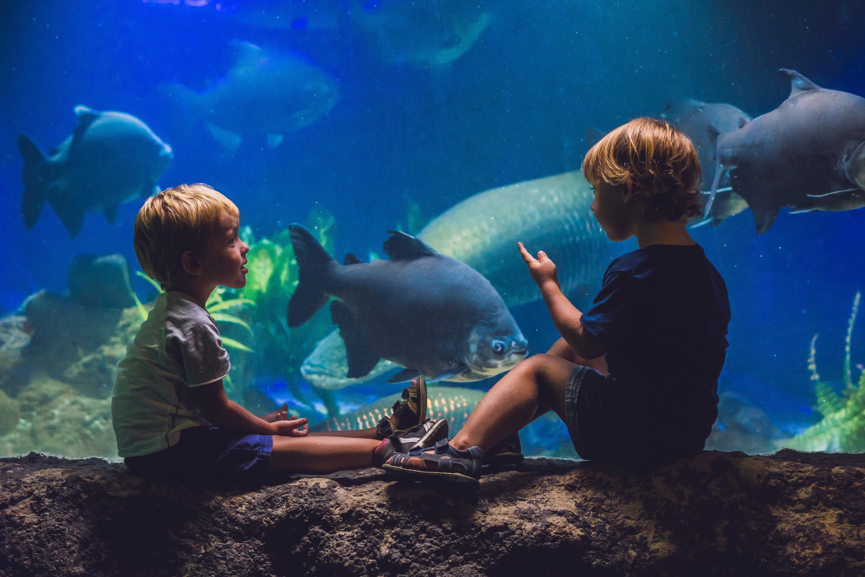 Sea Life Melbourne Aquarium Ticket